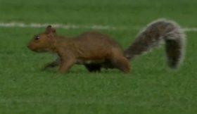 Spinning-Squirrel-Invades-Soccer-Field