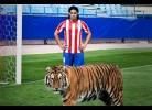 Falcao junta-se a um tigre verdadeiro