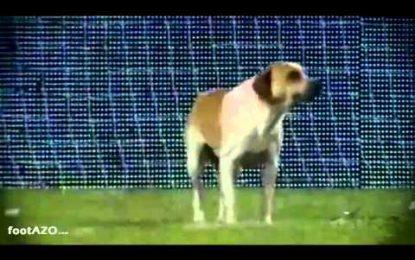 Invasão de campo canina