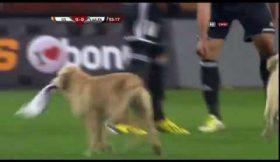 Dois cães divertem-se à grande durante amigável na Turquia