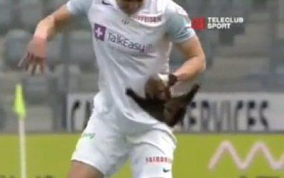 Jogo na Suiça invadido por uma marta