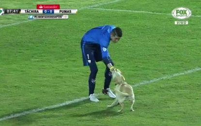 Cão invade campo durante encontro da Libertadores